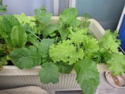 5月7日『野菜たち』