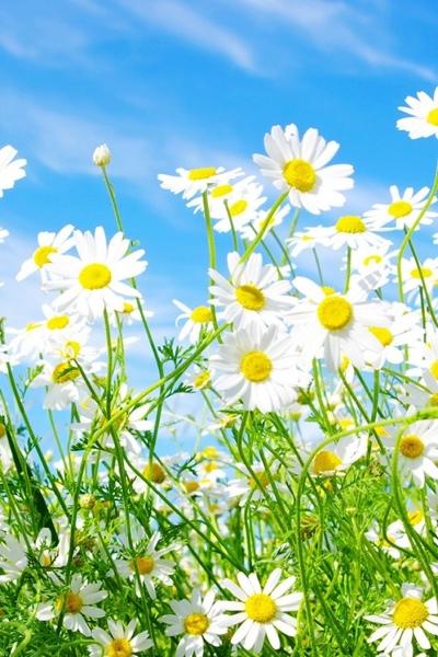 fc2blog_201304281735594af.jpg