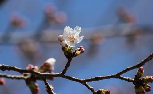 やっと咲いたよ。。。。。♪♪♪