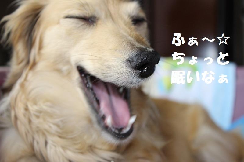 今日のミント便り~☆