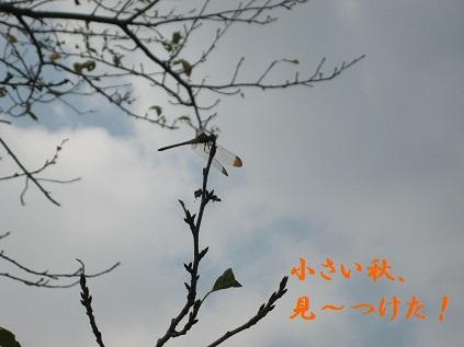 IMG_0515_20110912215430.jpg
