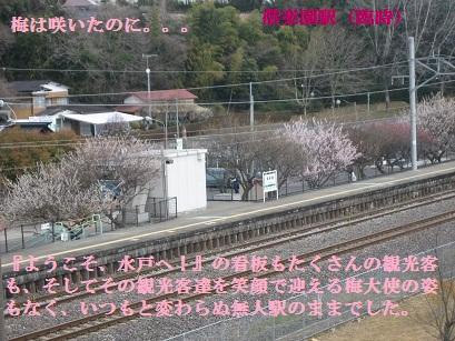 IMG_4245.jpg