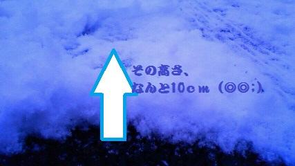 NEC_0671.jpg