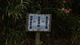 20131109金時山34