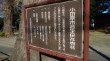 20131214小田原29