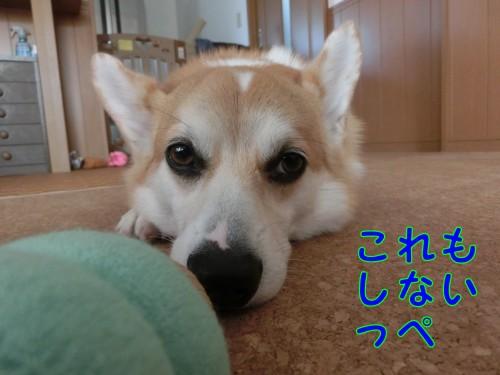 20140927_3.jpg
