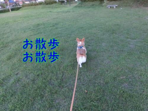 20140929_1.jpg