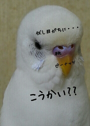 fc2_2013-11-28_23-52-21-446.jpg