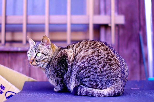 博多の猫にゃん