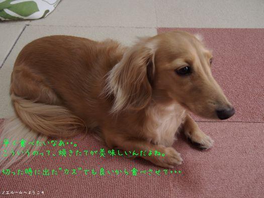 P9220126noel.jpg