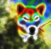 dogsasuke01.jpg