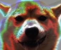 dogsasuke02.jpg