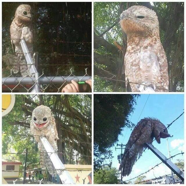 なんとベネズエラで 「謎の鳥」 が発見される!