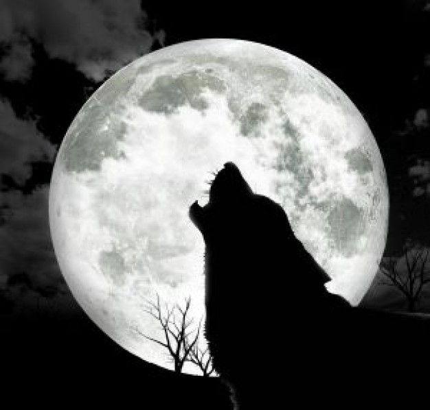 オオカミは犬の祖先ではないことが判明!共通の祖先から枝分かれ ゲノム解析で新事実