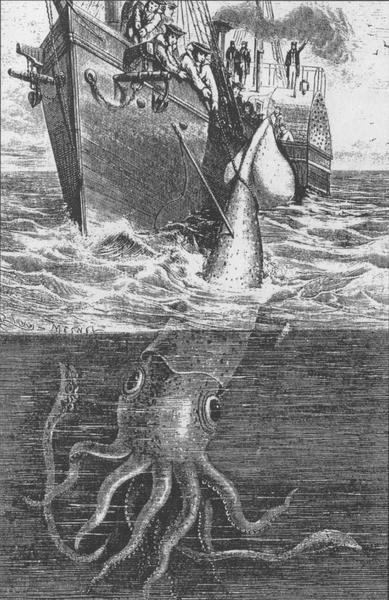 【新潟県佐渡】 またも現れた巨大「ダイオウイカ」! 巨大イカの相次ぐ水揚げに地元漁業関係者も驚き