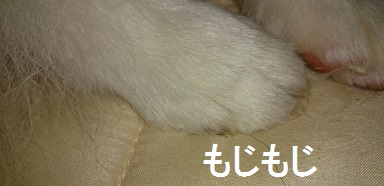 DSC_3412.jpg
