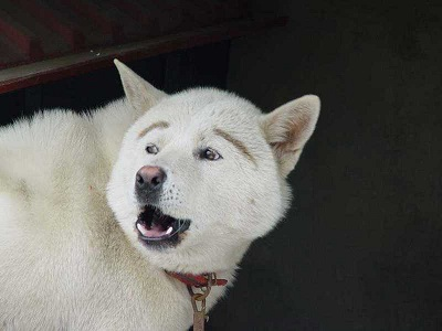 dog03.jpg