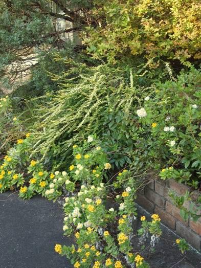 my-garden 068 (2)