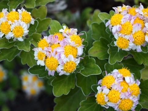 my-garden 059