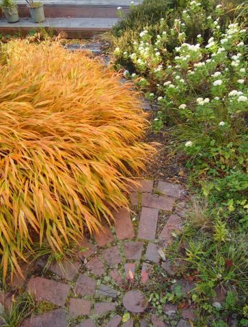 my-garden 021