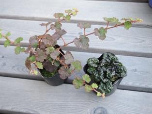 my-garden 017 (2)