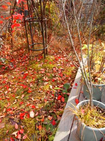 my-garden 013 (3)