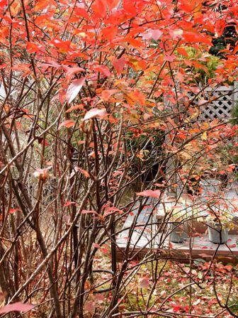 my-garden 019 (5)