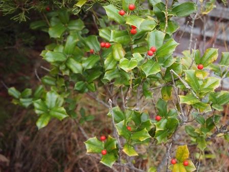 my-garden 045
