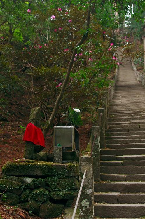 石楠花が咲く室生寺 其の参