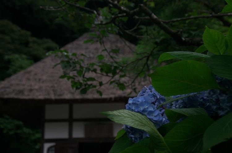 紫陽花のうた 7