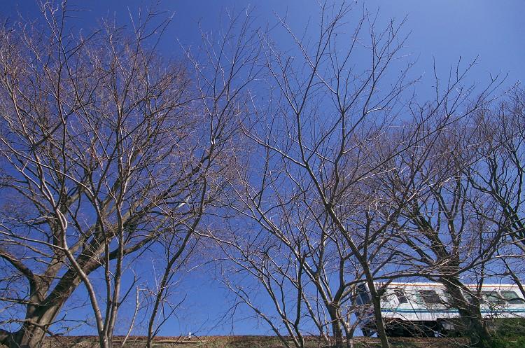 春色列車 3