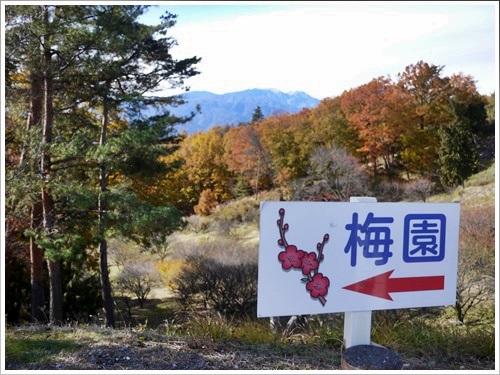 敷島公園11