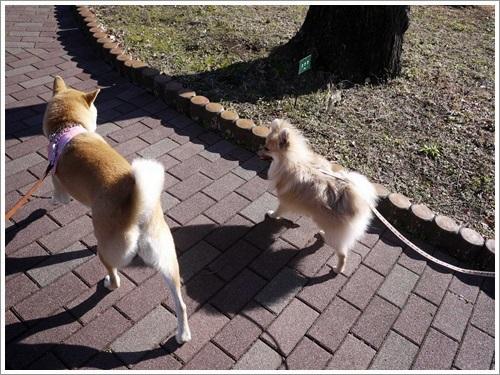 クウちゃんと一緒に公園散歩