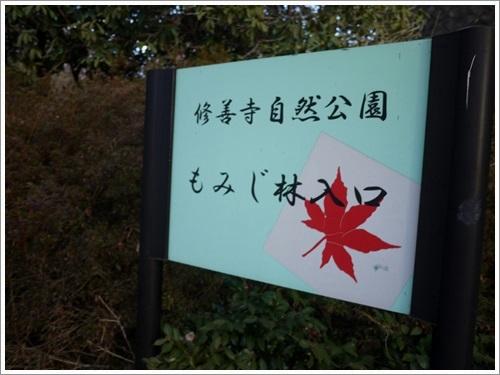 修善寺自然公園2