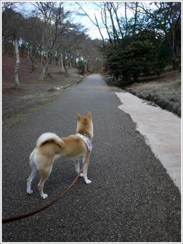 修善寺自然公園4