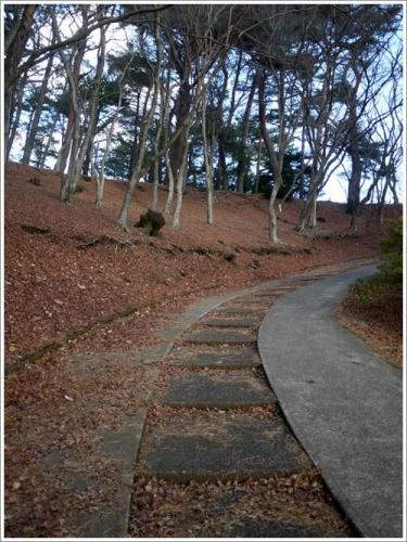 修善寺自然公園6