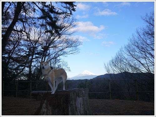 修善寺自然公園8
