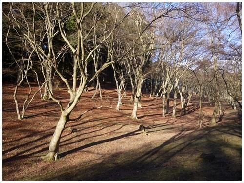 修善寺自然公園11