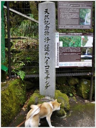 浄蓮の滝12