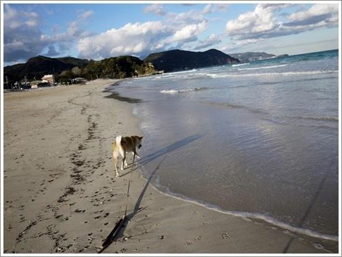 今井浜海岸8