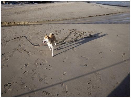 今井浜海岸15