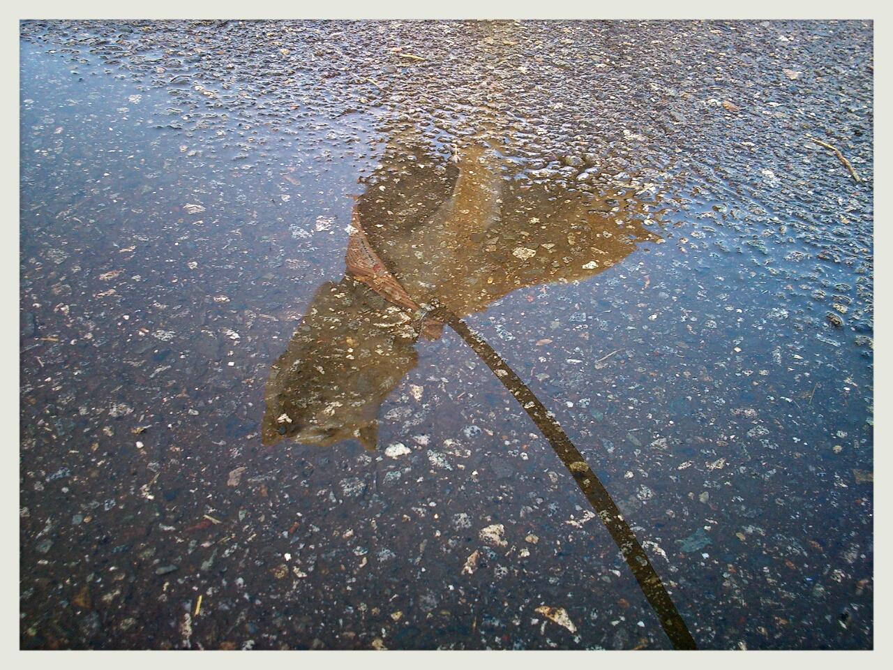 雨上がりの告白