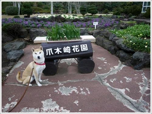 爪木崎花園で散策