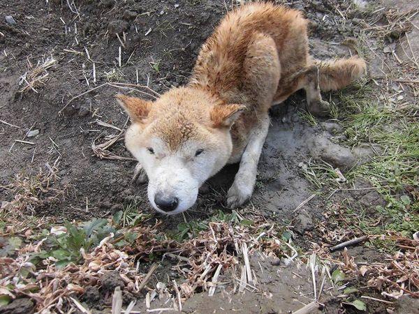 「また老犬の遺棄事件です~熊本県」 - 「殺処分ゼロの先を ...
