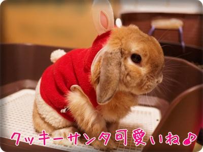 cookieblo1312254.jpg