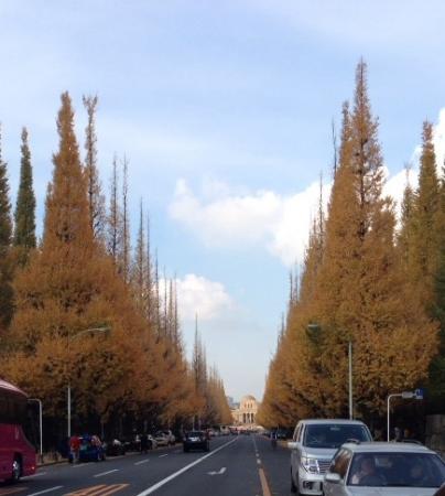 2013銀杏祭り並木1