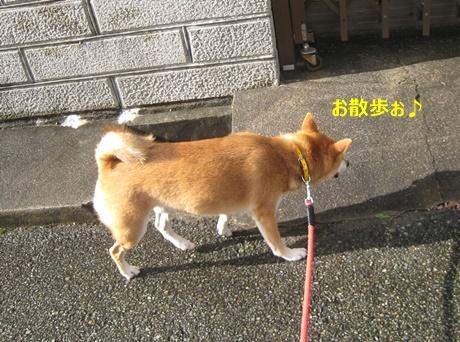 2お散歩開始