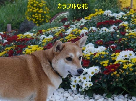 5色々な花