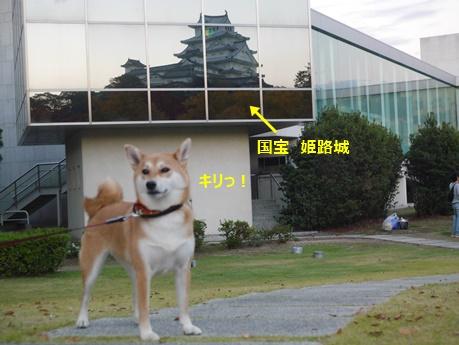 5対称姫路城