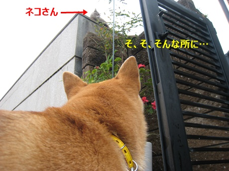 20141027193726c7e.jpg